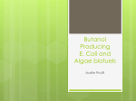 Butanol Producing E. Coli and Algae biofuels