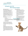 Caring for your Cat after Declaw Surgery