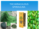 THE MIRACULOUS SPIROULINA