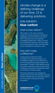 blue carbon - Conservation International