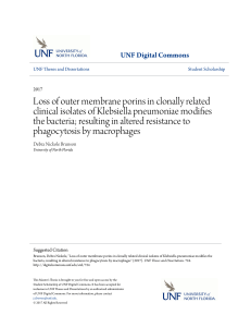 Loss of outer membrane porins in clonally related clinical isolates of