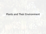 Plants and Their Environment