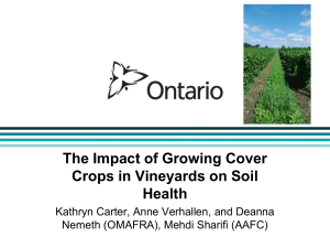 The Impact of Growing Cover Crops in Vineyards on Soil Health