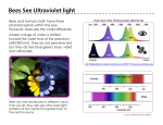 Bees See Ultraviolet light