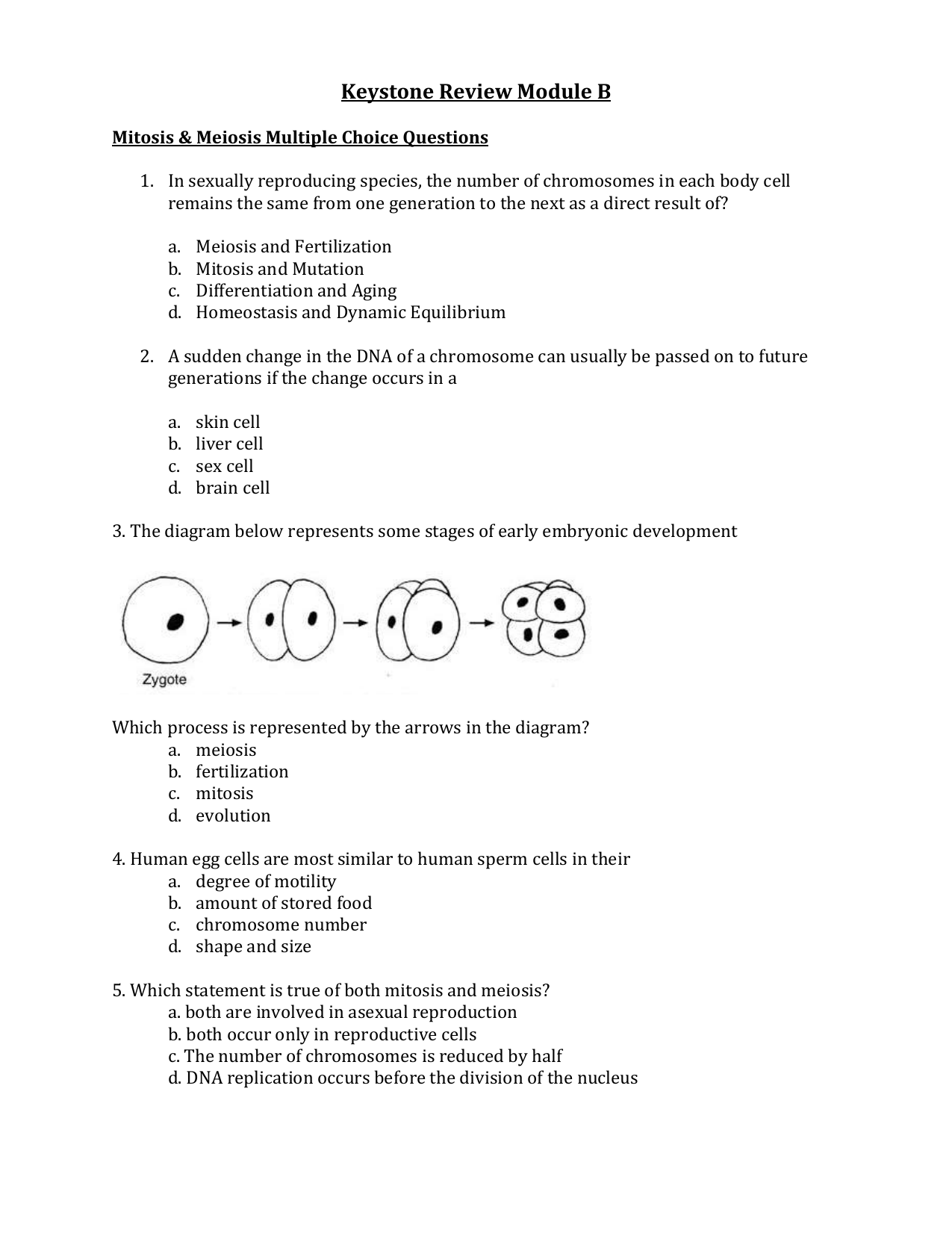 human evolution multiple choice questions