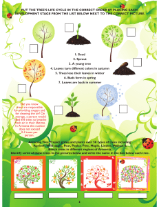 1. Seed 2. Sprout 3. A young tree 4. Leaves turn different colors in