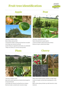 Fruit tree identification - People`s Trust for Endangered Species