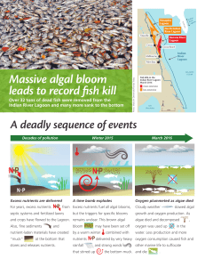 Massive algal bloom leads to record fish kill