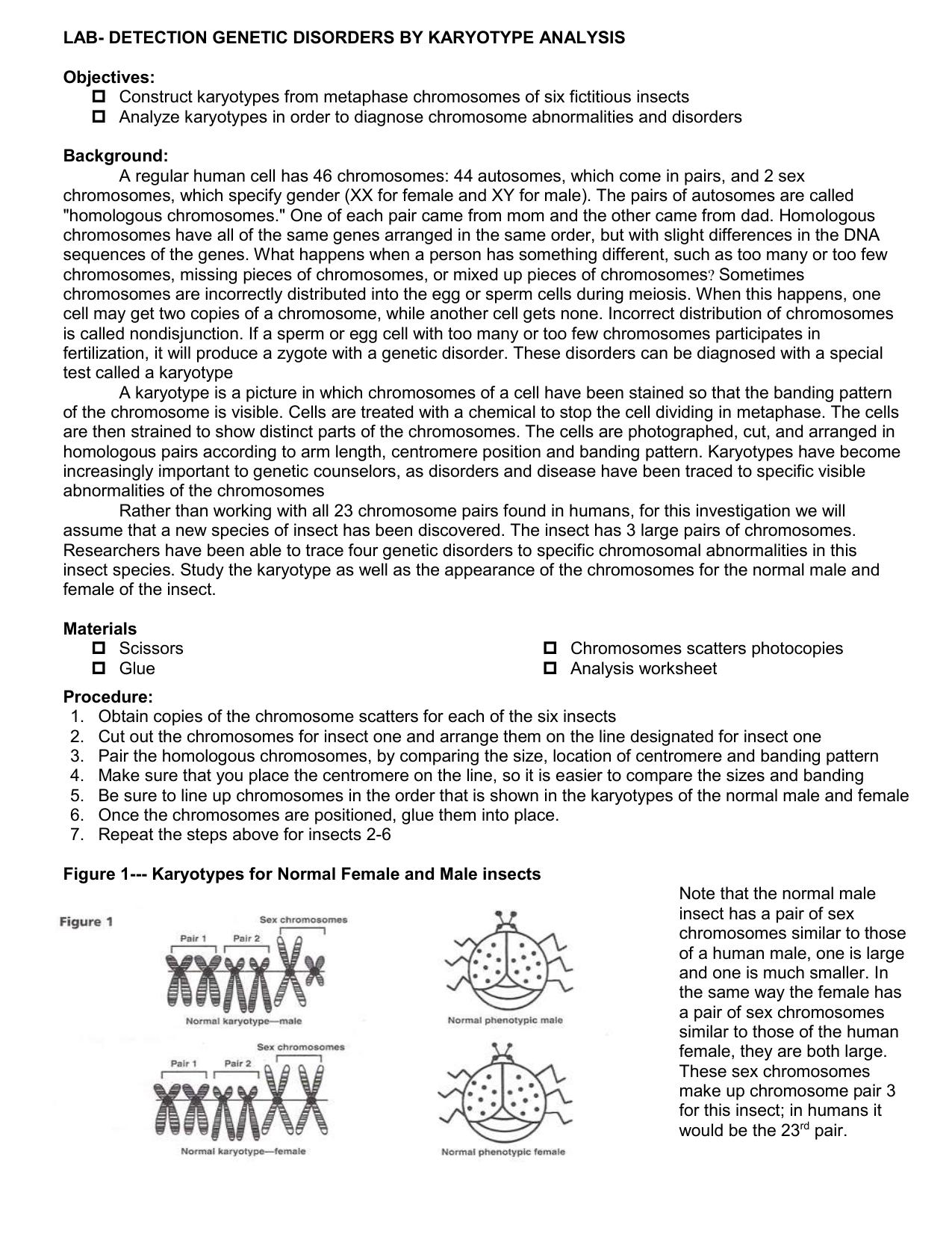 worksheet Chromosome Worksheet karyotype worksheet the best and most comprehensive worksheets lab