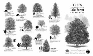Trees Recommended for Lake Forest Landscapes
