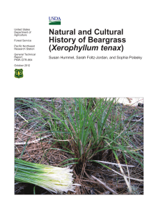 Natural and Cultural History of Beargrass (Xerophyllum tenax)