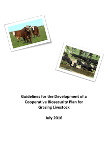 Guidelines for the Development of a