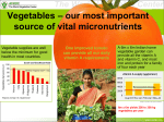 Vegetables – our most important source of vital micronutrients