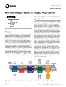 Monoclonal Antibodies Specific for Oxidative Phosphorylation
