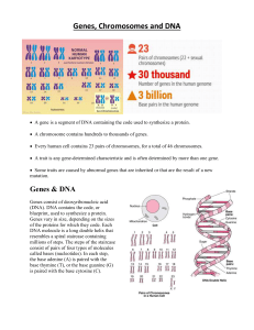 Genes Chromosomes and DNA