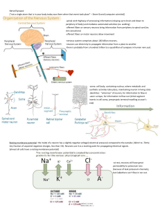 doc Nerve and synapses