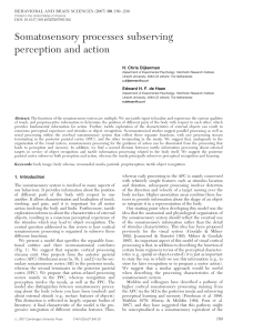 Somatosensory processes subserving perception and action