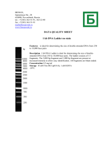 DATA QUALITY SHEET 1 kb DNA Ladder no stain