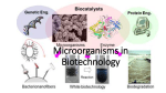 Microorganisms in Biotechnology