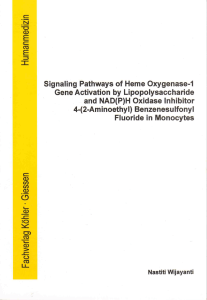 Signaling Pathways of Heme Oxygenase