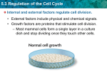 5.3 Regulation of the Cell Cycle CANCER