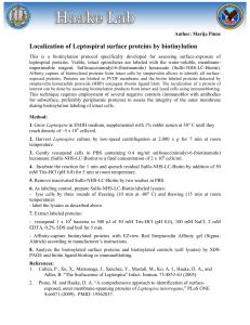 Localization of Leptospiral surface proteins by biotinylation