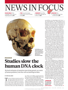 Studies slow the human DNA clock