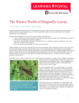 The Watery World of Dragonfly Larvae
