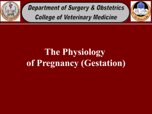 The Physiology of Pregnancy (Gestation)