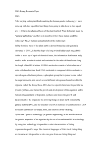 DNA Essay Research Paper DNAAfter staying on