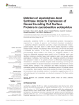 Deletion of Lipoteichoic Acid Synthase Impacts