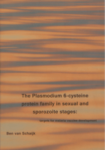 The Plasmodium 6-cysteine protein family in sexual and sporozoite