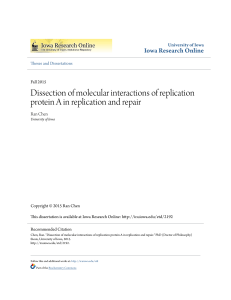 Dissection of molecular interactions of replication protein A in