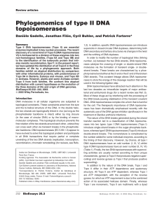 Phylogenomics of type II DNA topoisomerases