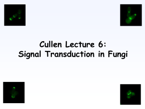 Cullen Lecture 6: Signal Transduction in Fungi Filamentous Growth