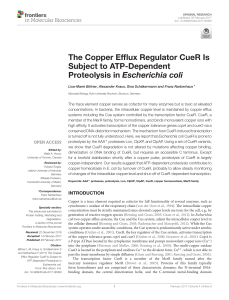 The Copper Efflux Regulator CueR Is Subject to ATP