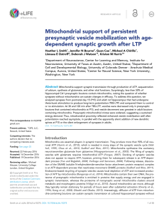 Mitochondrial support of persistent presynaptic vesicle mobilization