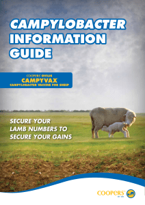 campylobacter information guide