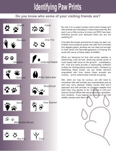 Identifying Paw Prints